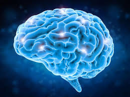 Neurotransmissão